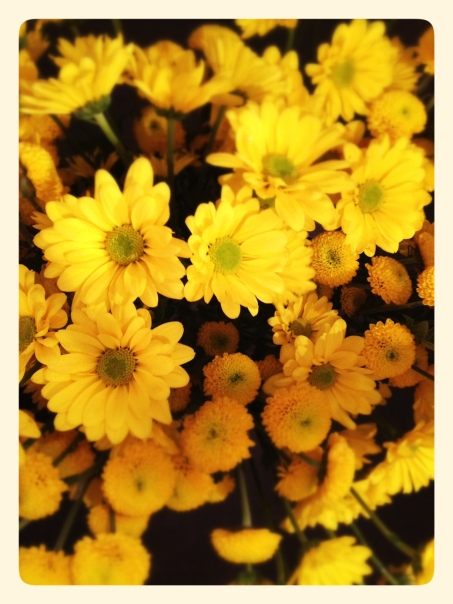 Yellow Daisies - Caring for Daisies
