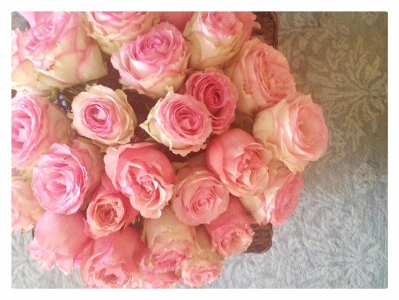 Birthday Pink Garden Cabbage Roses